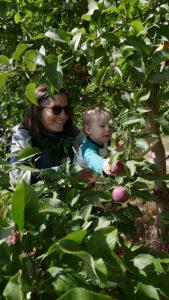 Apple Picking @ Elegant Farmer