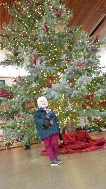 Zoo Christmas Trees