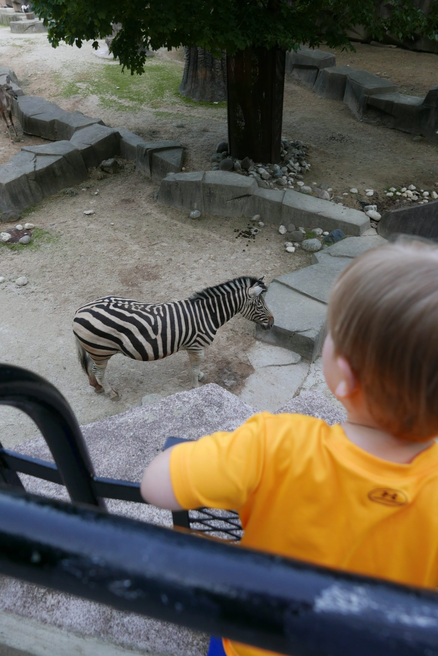 Zebras @ Milwaukee Co. Zoo