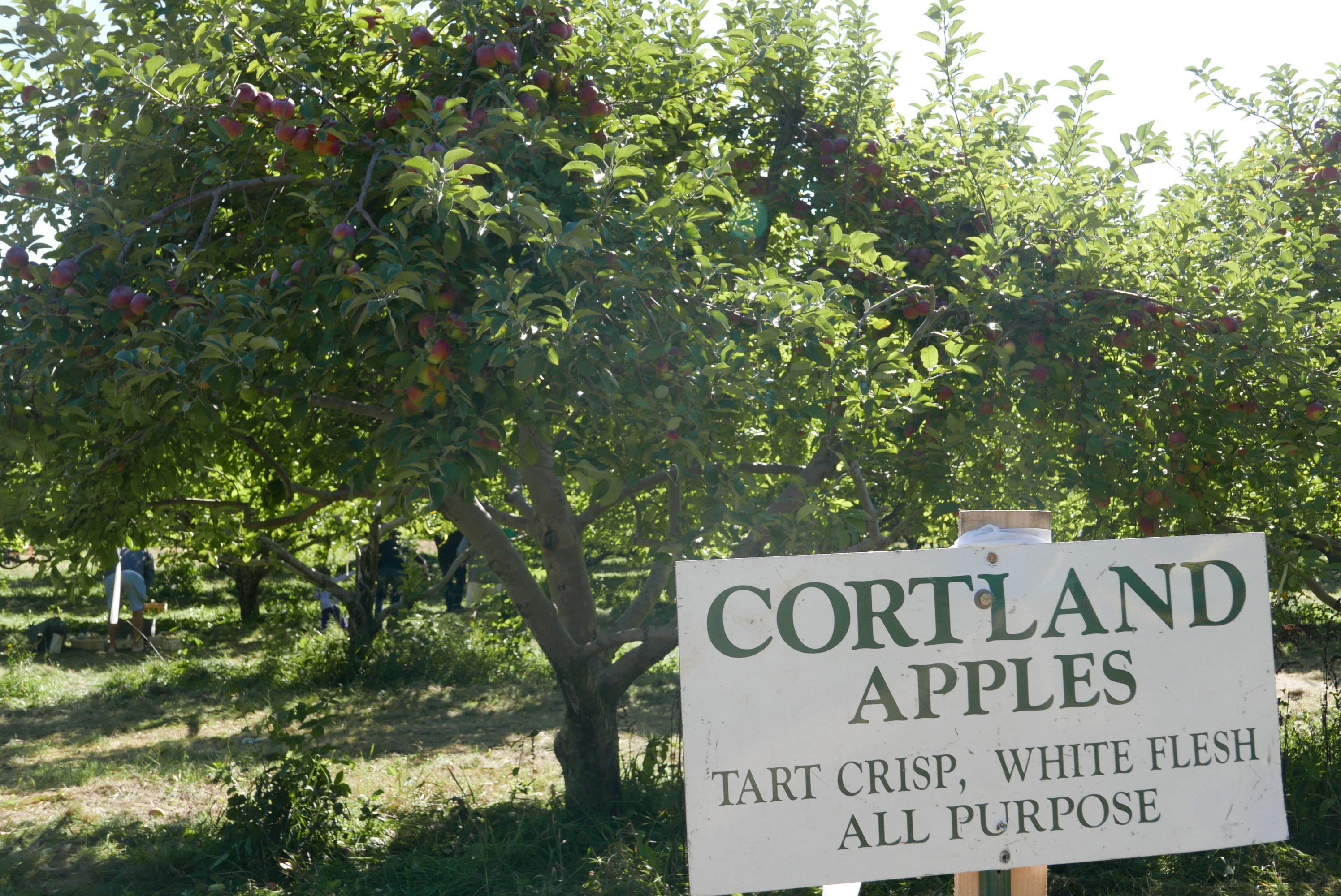 Elegant Farmer Apple Orchard