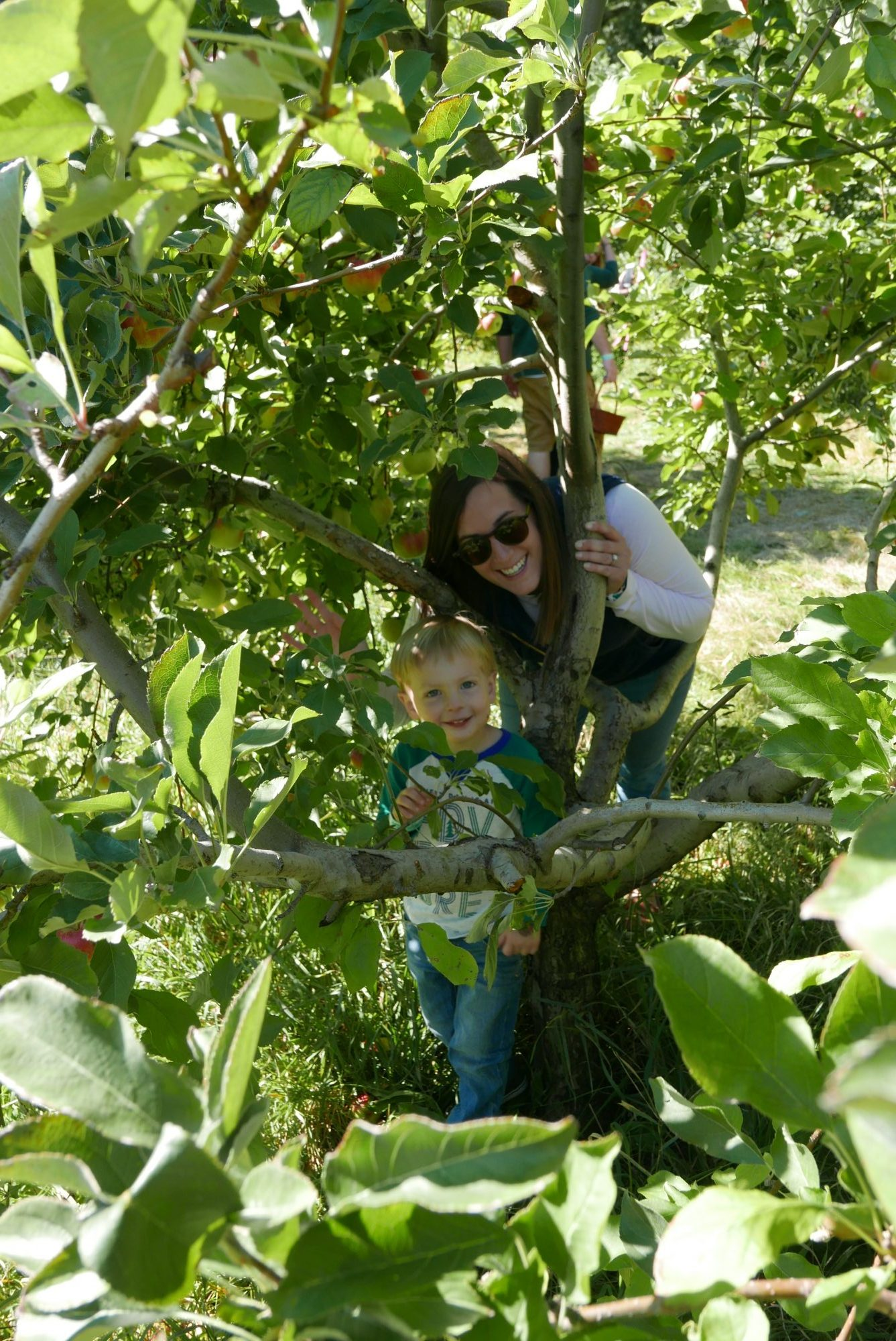Elegant Farmer Apple Orchard