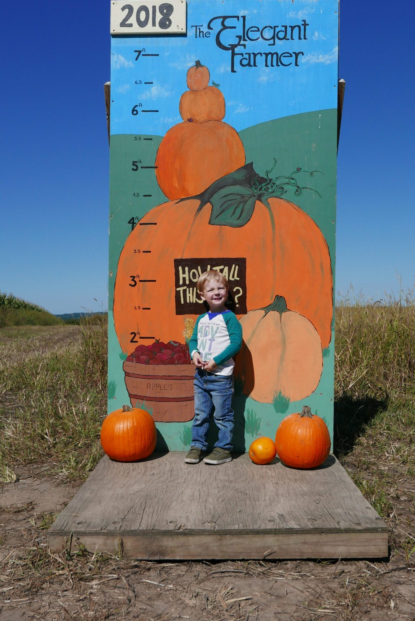 Pumpkin Patch at Elegant Farmer
