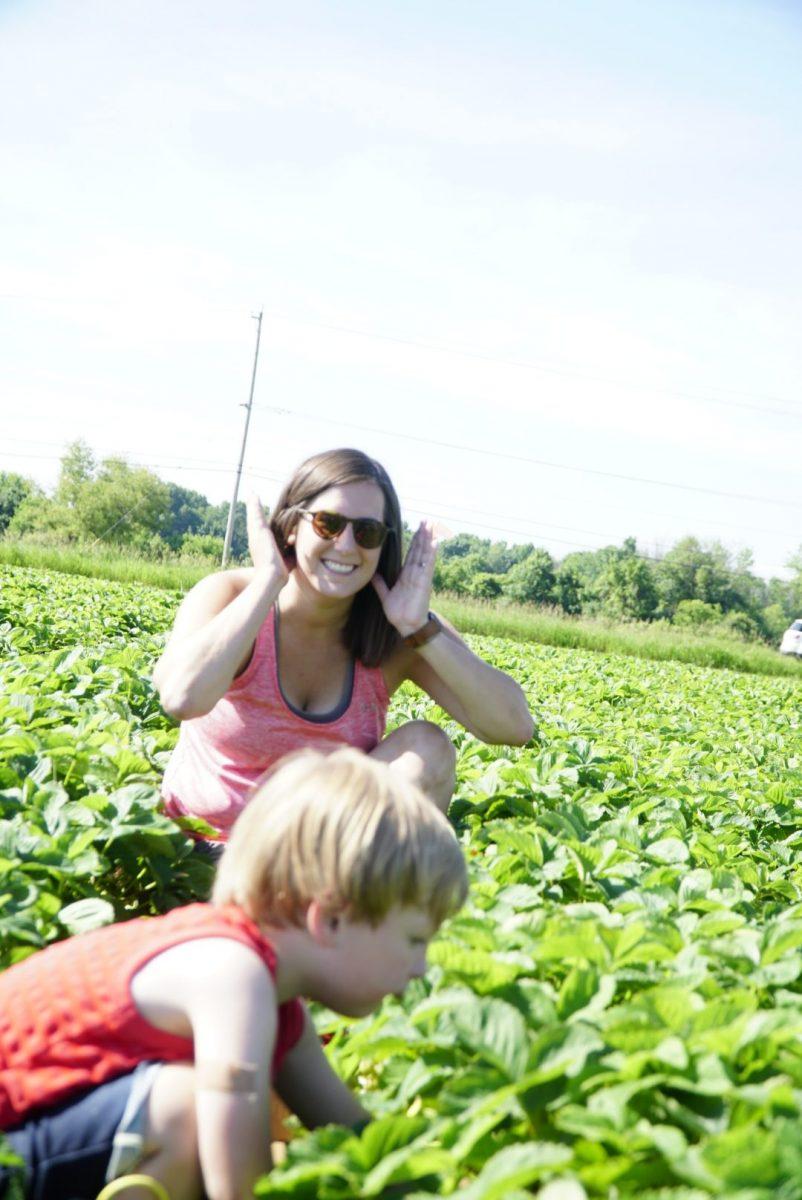 Strawberry picking at Basse's